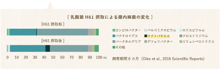 ペットスタンス 乳酸菌H61
